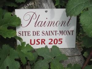 Gascogne -Saint Mont -1