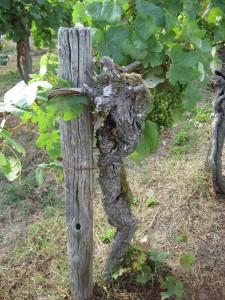 Gascogne- Saint Mont - Weinmuseum-11
