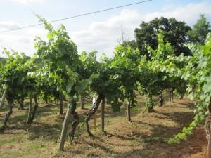 Gascogne - Saint Mont - Weinmuseum - klein